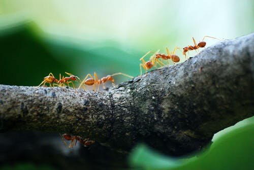 Reasons to remove ants from your property